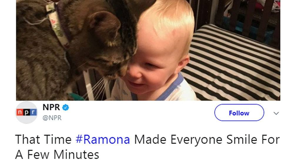 ramona npr cat tweet